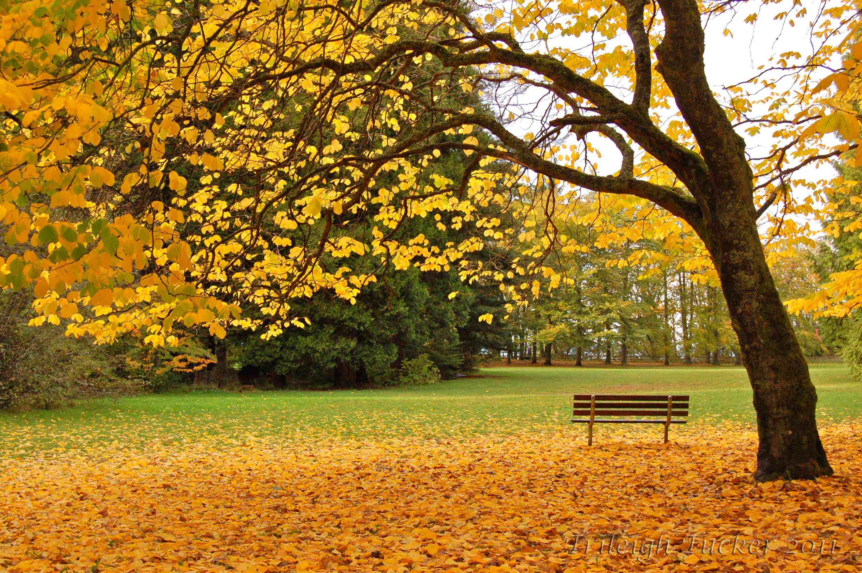 autumn | Trileigh Tucker