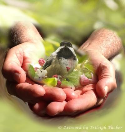 Bird in the hand - Trileigh Tucker