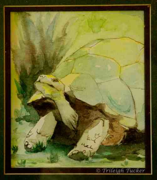 Galapagos Tortoise (I think)