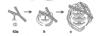 """Nest development for aerial yellow jackets. (a) Nest starts with twisted stem and initial cell. (b) Queen nest with beginning of layered envelope. (c) Mature nest with many cells, enclosed within sheath. Figure (14.62) and information from Wenzel, John W. """"Evolution of nest architecture."""" The social biology of wasps (1991): 480-519."""