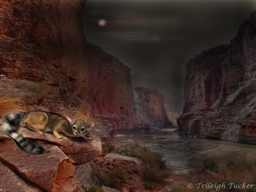 Ringtail cat (Bassariscus astutus) by moonlight, Grand Canyon.  Photo and painting by Trileigh Tucker.