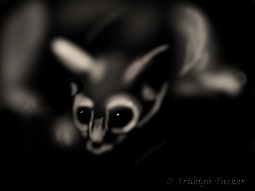 Ringtail cat at night. Painting by Trileigh Tucker.