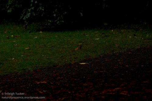 2013-9-29_0041-v2-Mouse (b) in darkened scene, human vision-Trileigh Tucker