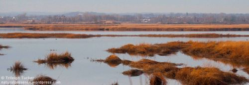 Wetland, Lewis Gut, Bridgeport, CT