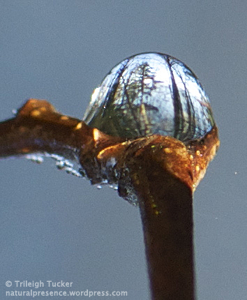 Forest on a pedestal. (Image is inverted; dewdrop was suspended from a twig.)