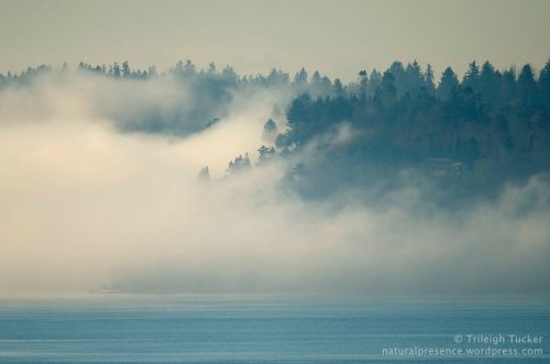 Fog breaks over Vashon Island, WA January 25, 2014