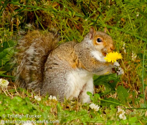Squirrel with flower
